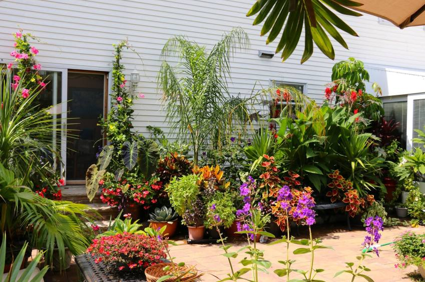 A look at my garden in New York