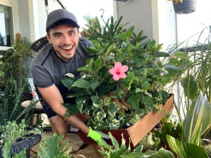 Giving plant advice to apartment gardeners