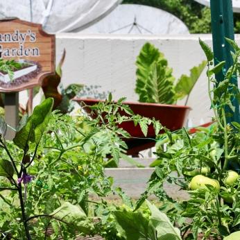 A look at Gandys Garden in Spring