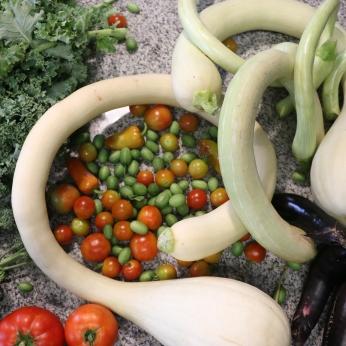 A morning harvest from WLTX Gandy's Garden